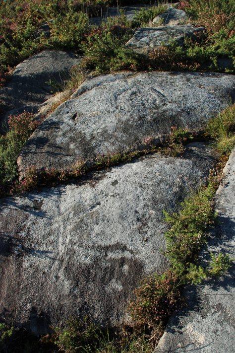 cervo da pedra bicuda de loureiro e combinacións circulares