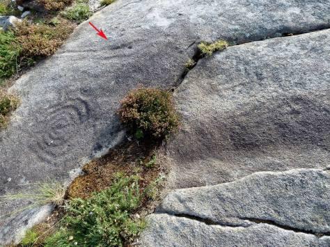 Detalle da posible serpe